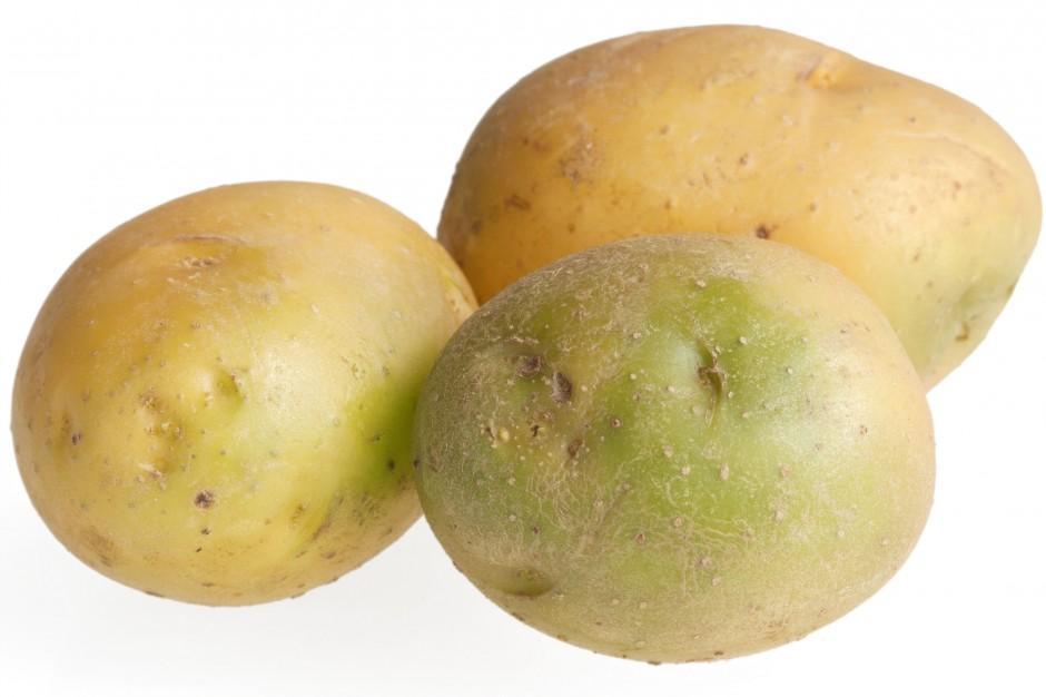 Batatas venenosas