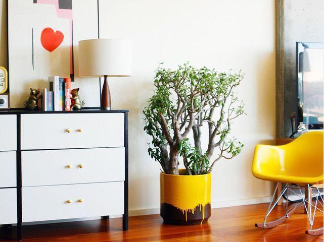 Plantas na decoração 3