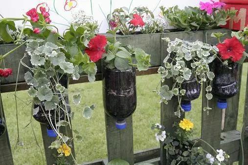 Jardim com garrafa pet 2
