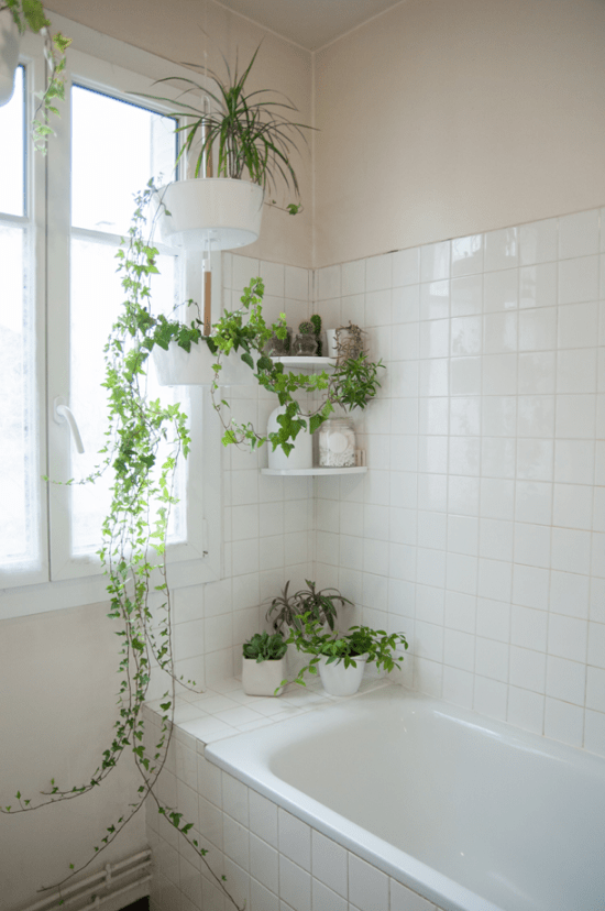 Plantas em casa.