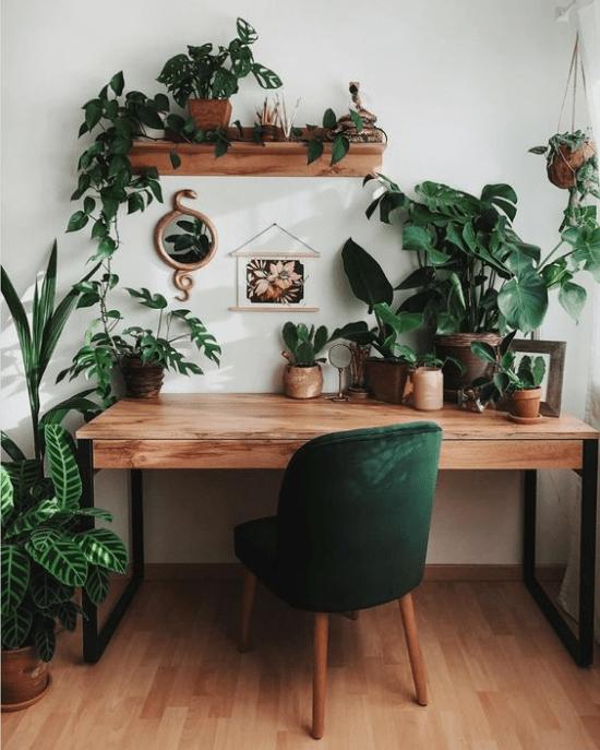 Plantas no home office.