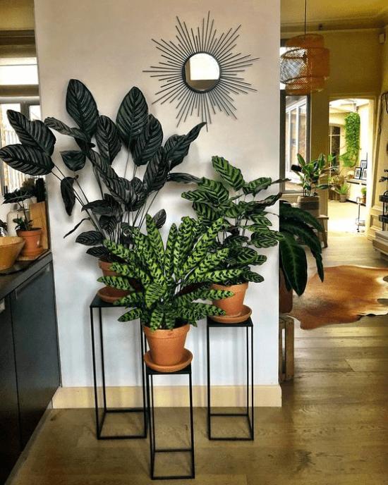 Plantas em casa: 15 dicas práticas.