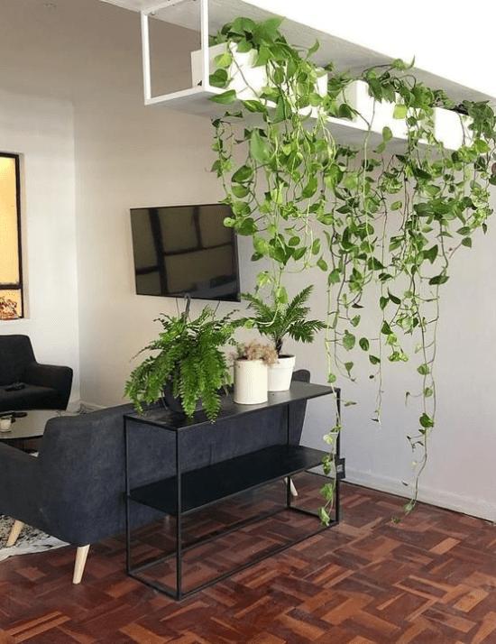 Plantas em casa: dicas práticas.